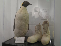 Taxidermy penguin from McMurdo Sound, Antartica. Bunny boots kept the Seabees warm in Antartica with one inch of wool felt insulation.