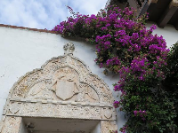 Bougainvillea tumbling over a wall.