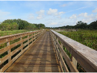 The wooden boardwalk.