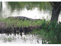 It's fun to spot an alligator!