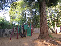Redwood tree in the middle of the park.