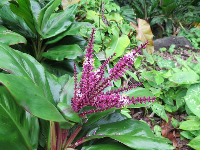 Purple flowering plant.