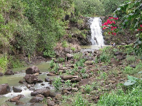 The waterfall and red bougainvillea branch.