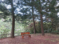Wooden bench and pines.