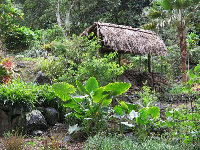 Tropical plants and grass shack.