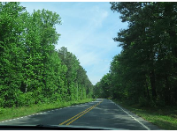 Lush forest on the drive to Jordan Lake.