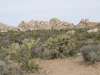 Teddy bear cholla and flintstone-style rock formations.