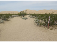 The beginning of the Kelso Dunes trail.