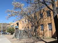 Cherry tree and adobe building.