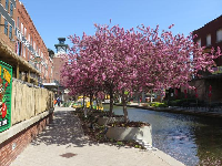 Blossoming trees along the canal.