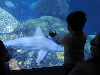 A little boy checks out a shark.