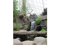 Waterfall in the conservatory area.