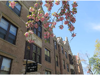 Spring blossoms and Pettigrew Hall.