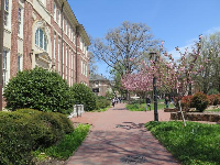 Hanes Hall and blossoming trees in spring.