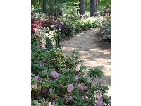Shady path lined with pinks and purples.
