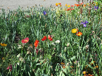 Colorful assortment of flowers near the entrance.