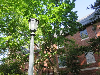 Buildings and lamppost, as seen from the arboretum paths.