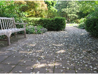 Petals on the ground!