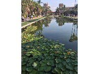 Summer water lilies in Balboa Park.