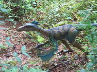 Troodon dinosaurs had air-filled bones like birds.