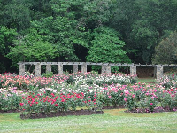 Rose garden with forest behind.