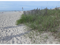 Fine sand and grasses, as you enter the beach.