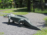 Crocodile bench!