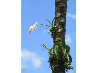 Orchid on a palm tree.