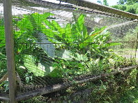 Banana grove inside an animal cage.