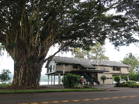 Hilo Bay Cafe and its beautiful banyan tree.