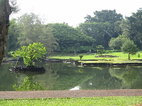 Ponds, greenest grass, and monkey pod tree.