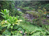 Tropical plants by the lookout.