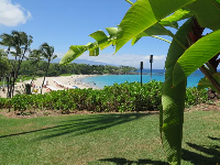 Banana fronds and perfect beach in the distance...aaaaah.