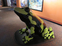 Spotted frog sculpture.