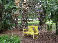 Yellow bench in a tropical spot.