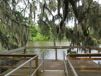 A nice lookout, toward the water, under the Spanish moss.