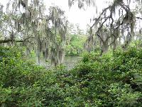 Water and Spanish moss... a perfect combination.