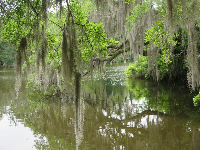 Spanish moss in a peaceful spot on the water.