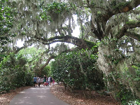A group walks under the Spanish moss.