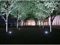 Trees lit up in the courtyard at night.