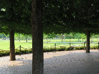 Views of green, from under the linden trees.