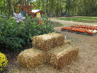 Hay, scarecrow, pumpkins, and mums.
