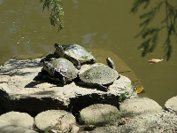 Turtles at the shore.