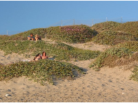 Cute couples on the dunes at Coal Oil Point on a warm summer evening.