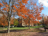 Red trees on campus in autumn.