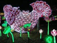 Fish and lotus flowers, at the Chinese Lantern Festival.