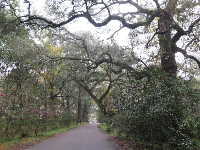 The lovely driveway leading to the plantation.
