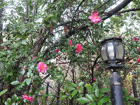 Lamppost and flowers.