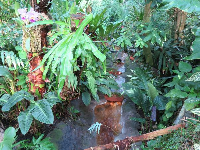 Stream and tropical vegetation in the forest aviary.