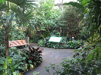 Walkway in the forest aviary.